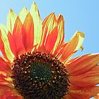 Fiery Sunflower by Tjfarthing