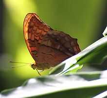 Goldwing Butterfly by ZanneArt