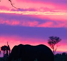 Elephant silhouette londolozi sunset by jozi1