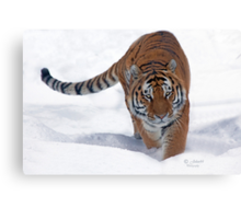His Majesty the Siberian Tiger Canvas Print