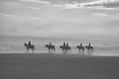 Horses In The Fog by ©Dawne M. Dunton