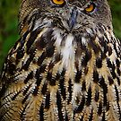 European or Eurasian Eagle Owl by Nancy Richard
