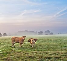 A Misty September Moooning by mhfore