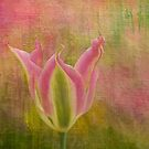Tulip by Aase