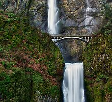 Multnomah...From Top To Bottom by TeresaB
