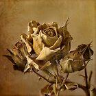 Rose by TeaRose