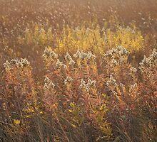 Autumn Glow by Stephen Thomas