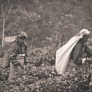 tea pickers by Brooke Reynolds