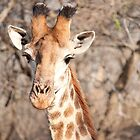 Handsome 'Raffe by BeccE