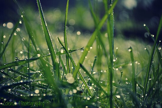 Dew grass by Zoe Harris
