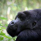 The Mountain Gorilla by monsieurI
