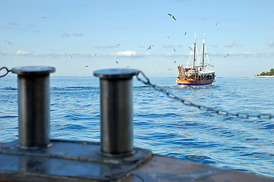 The birds smell there is fish aboard by Arie Koene