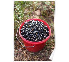 bucket of blueberries Poster