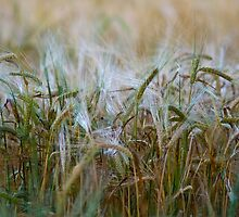 Muted crops by seanusmaximus