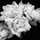 Roses in Mono by seanusmaximus