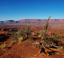 Near Fisher Towers with Colorado River, Utah by Claudio Del Luongo