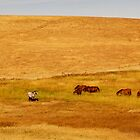 Grazing Horses in a Golden Field by bobkeenan