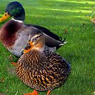 A Ducky Couple  by John  Kapusta