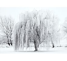 Winter Willow Photographic Print