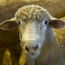 sheeps head by bobkeenan