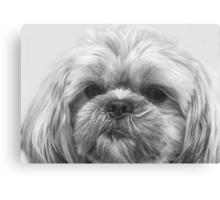Shaggy Dog, Face to Face!  Canvas Print