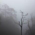 Misty forest by eugenesim