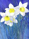 Daffies by Jacki Stokes
