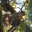 Squirrel in a Tree at Sweet Marsh  by Deb Fedeler