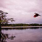 Raiforest's bird by borjoz