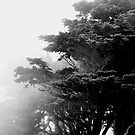 Golden Gate Park by Thomas Barker