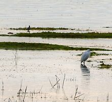 Little Egret At High Tide by Jamie  Green