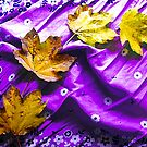 Newly Fallen Leaves by Shawna Rowe