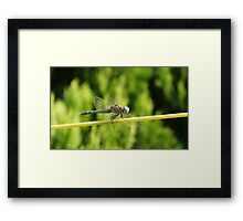 precision blue Framed Print