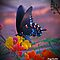 Butterfly on paradise bush by Peg Robb
