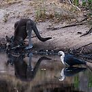 At the Waterhole by Ian Creek