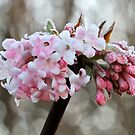 Chilly Blossom by dilouise