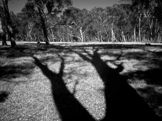 Scary Trees- Hahndorf Paddock by Ben Loveday