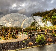 The Mediterranean Biome by Rob Hawkins
