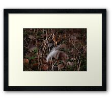 Lonely Feather Framed Print