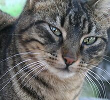 Inquisitive Tabby Cat With Green Eyes by taiche