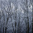Snow Covered Trees by Philip Kearney