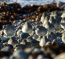 Beach Pebbles Or Knot? by VoluntaryRanger