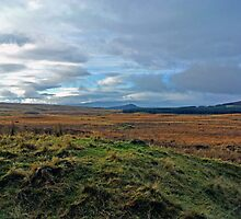 Galloway Forrest by CreatedPhoto