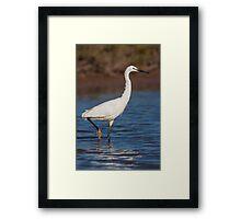 Little Egret in the water Framed Print