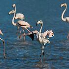 Flamingo's by LaurentS