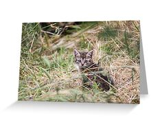 Little Kitten in the bushes Greeting Card