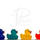 4 Ducks by JPAube