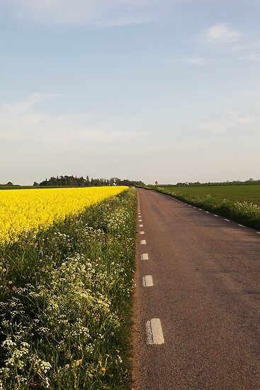 Summer Road by Madeleine Forsberg