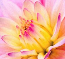 flower close up 6 by Adam Asar