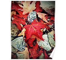 Red Maple Leaves on the Rocks Poster